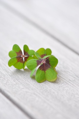 lucky-clover-1933008